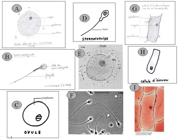Remediation Sur La Representation Schematique Des Chromosomes Page 2 7 Sciences De La Vie Et De La Terre Pedagogie Academie De Poitiers